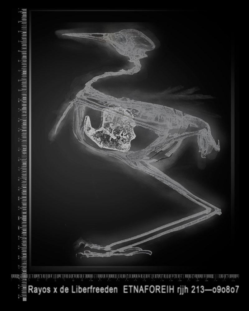 Rayos X de un Liberfreeden, impresión en acetato del Artista Plástico Roberto Jiménez Hidalgo